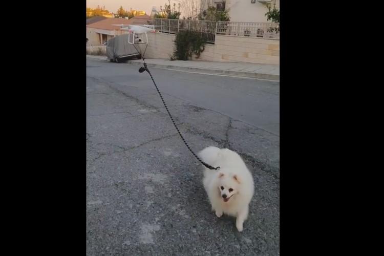 Cyprus Man Using a Drone to Walk His Dog Amidst Coronavirus Lockdown
