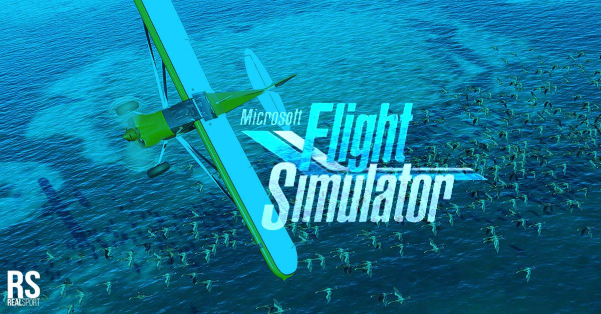 microsoft flight simulator gameplay graphics